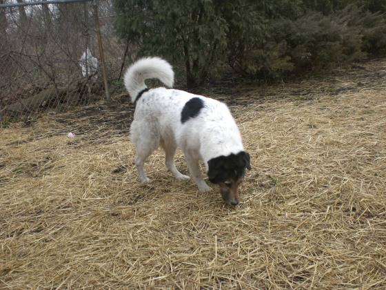 Rizzo Shepherd 2
