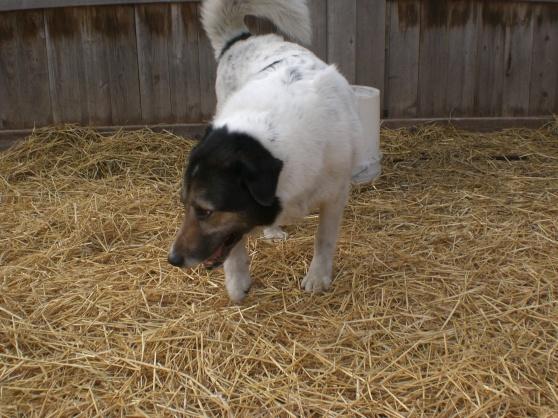 Rizzo Shepherd 3