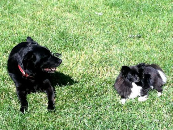 Max and Bella