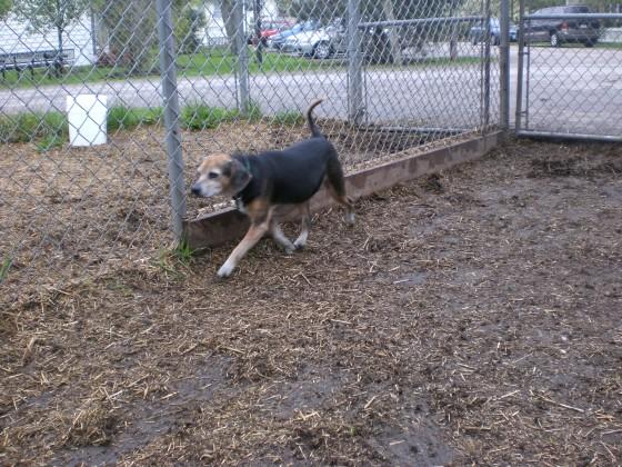 Whoopi Beagle 2