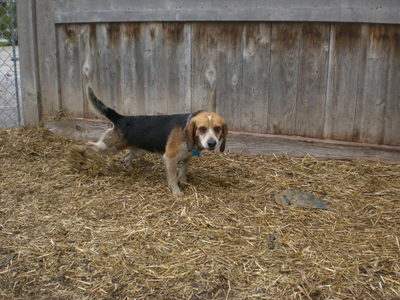 Mack Beagle 2
