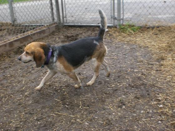 Mack Beagle 3