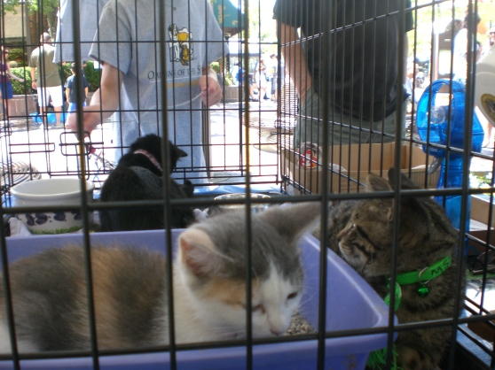 Orphans of the Storm kittens Highland Park