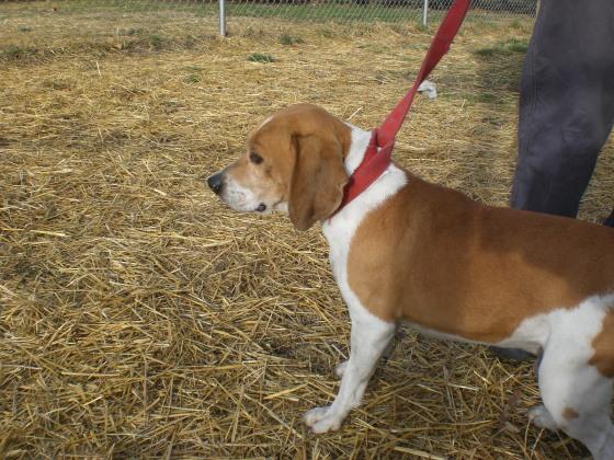 Sanders Beagle 1