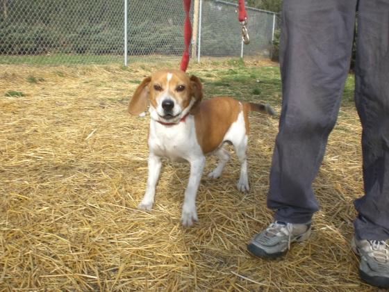 Sanders Beagle 2