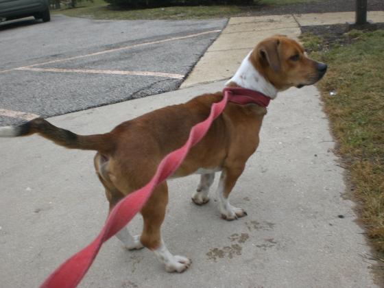 Mister Beagle 2
