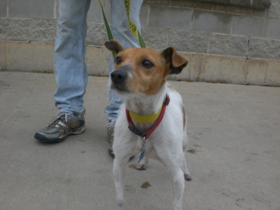 Rita Parson Russell Terrier 2