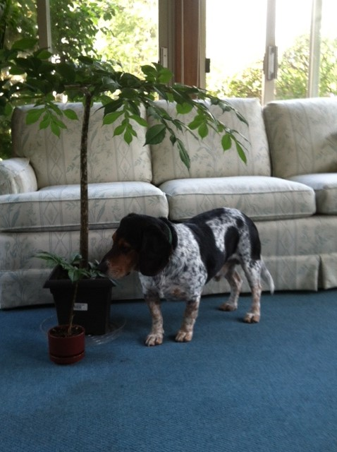 Now Cooper loves the house plants!