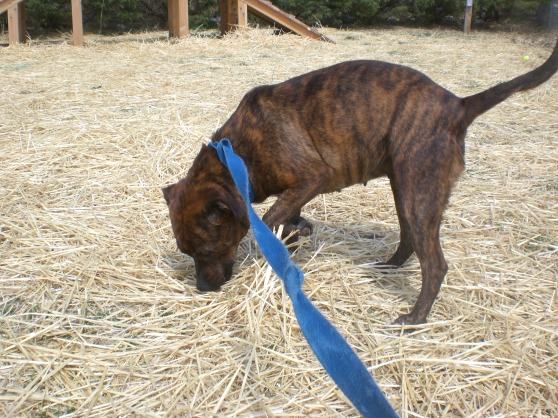 Carly Mountain Cur mix 2