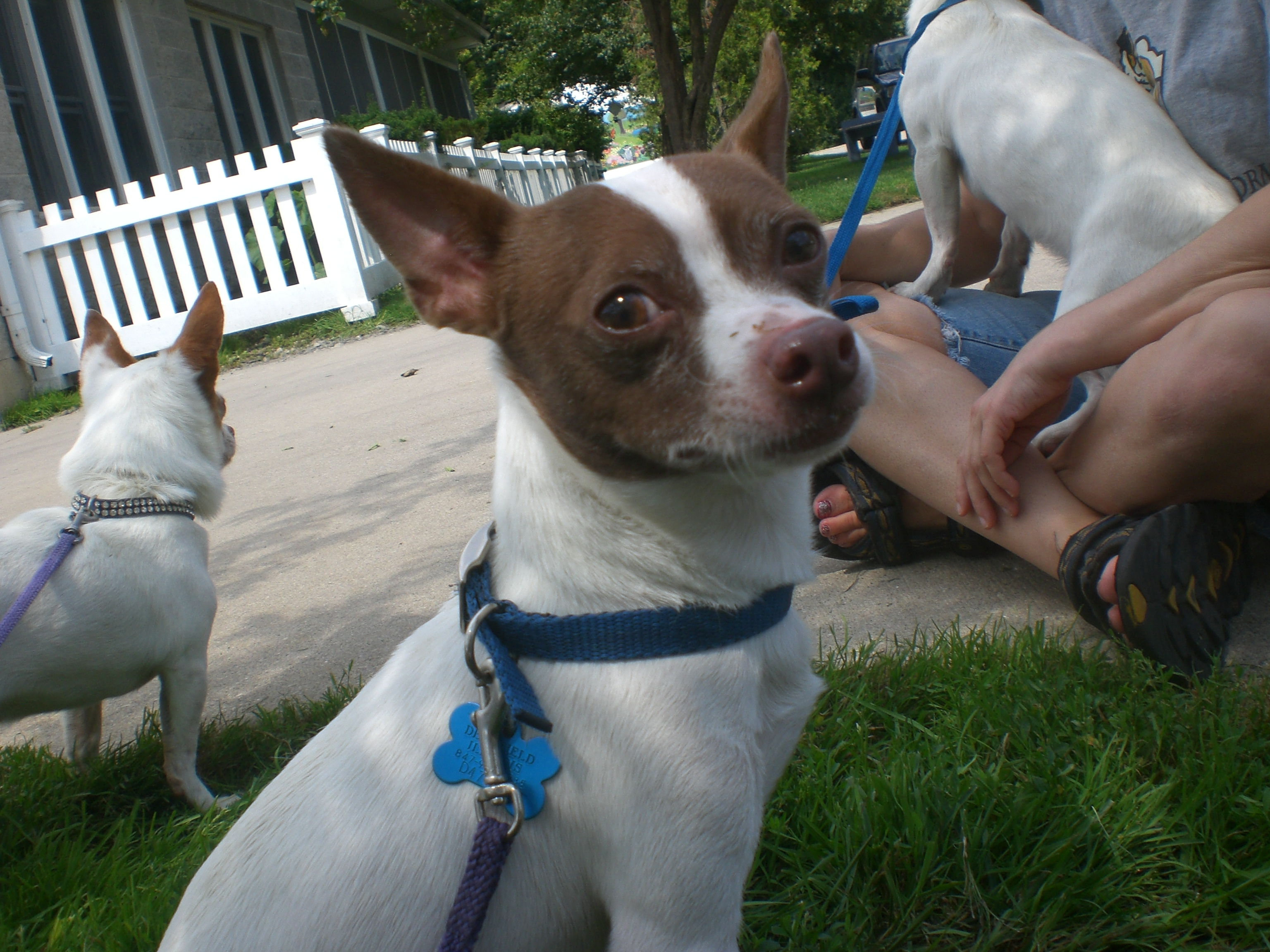 Orphans of the Storm® Dog Days of Summer   Meet The Pooches