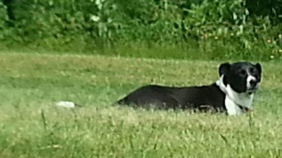 Eddie enjoying the fresh air in his backyard
