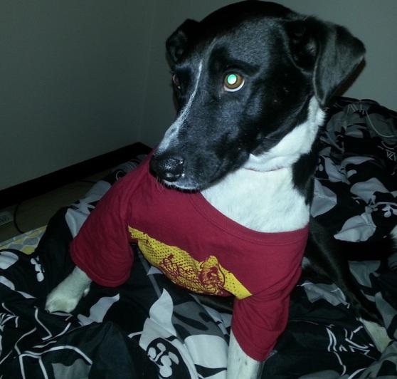 Eddie wearing Emma's Iowa State shirt