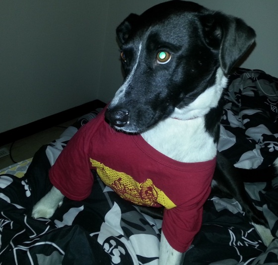 Eddie wearing Emma's Iowa State shirt