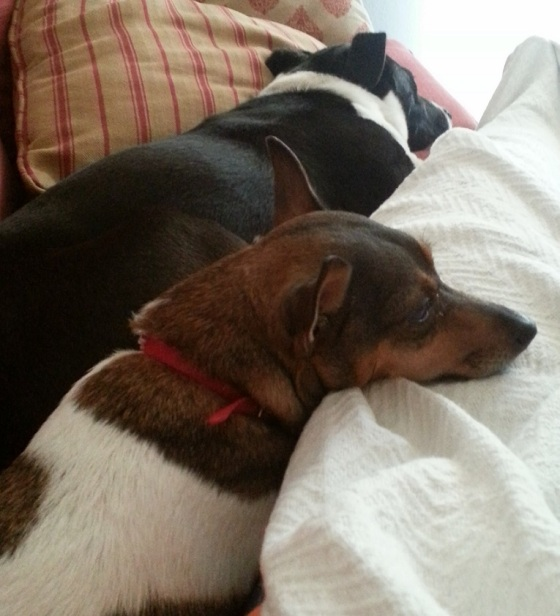 """Eddie napping on the couch with his """"cousin"""" Gracie"""