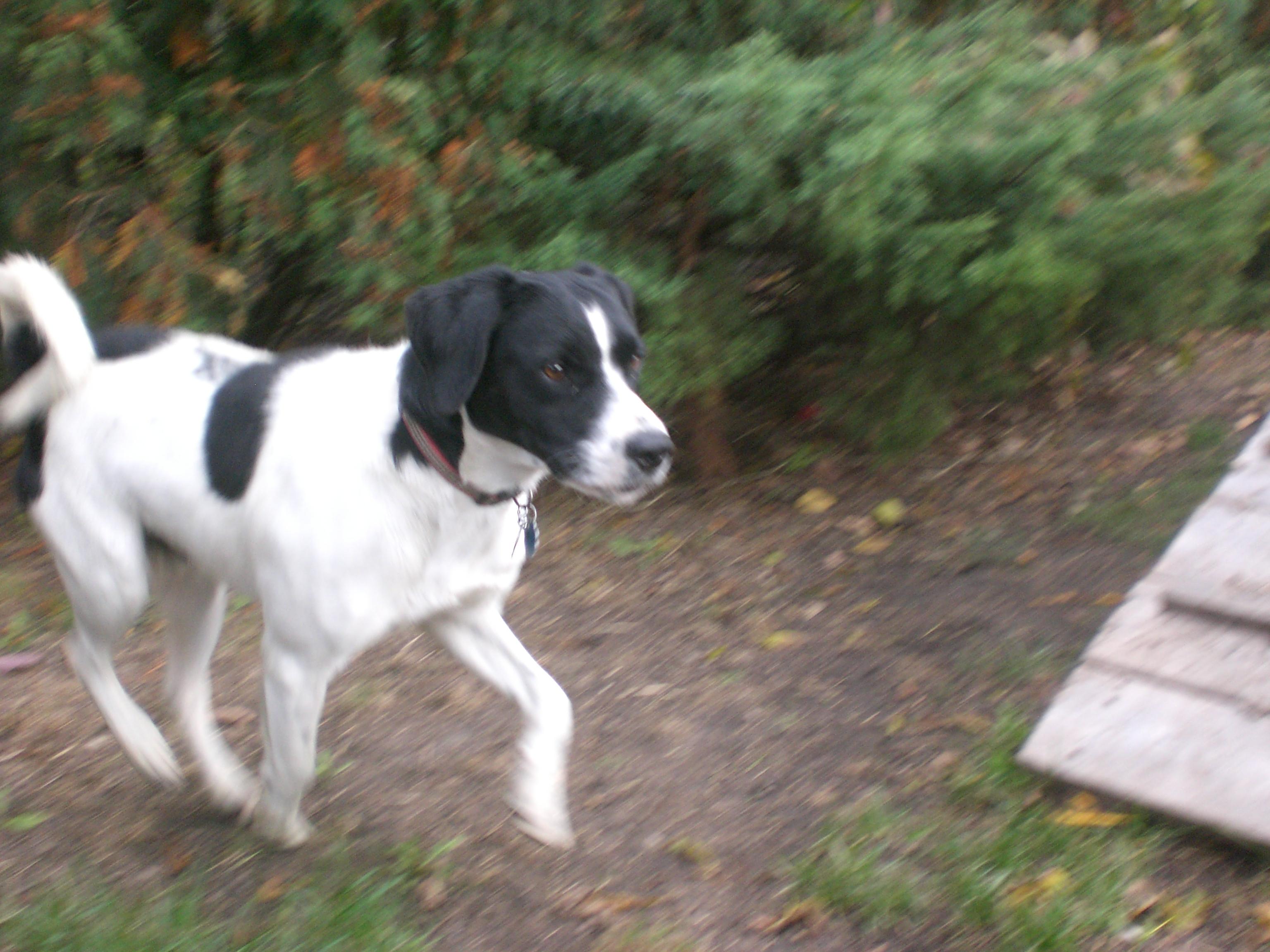 Most Inspiring Super Cute Beagle Adorable Dog - cimg8151  Snapshot_42828  .jpg