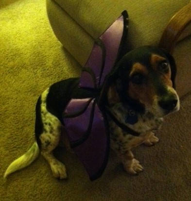 Happy Halloween from Cooper the Batdog!
