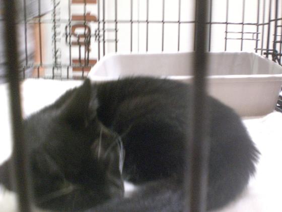 Cute (sleepy) kitty #2