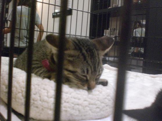 Cute kitten #1