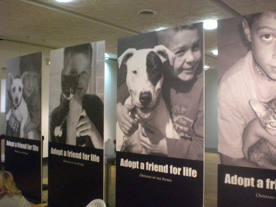 Posters with happy adoption pictures