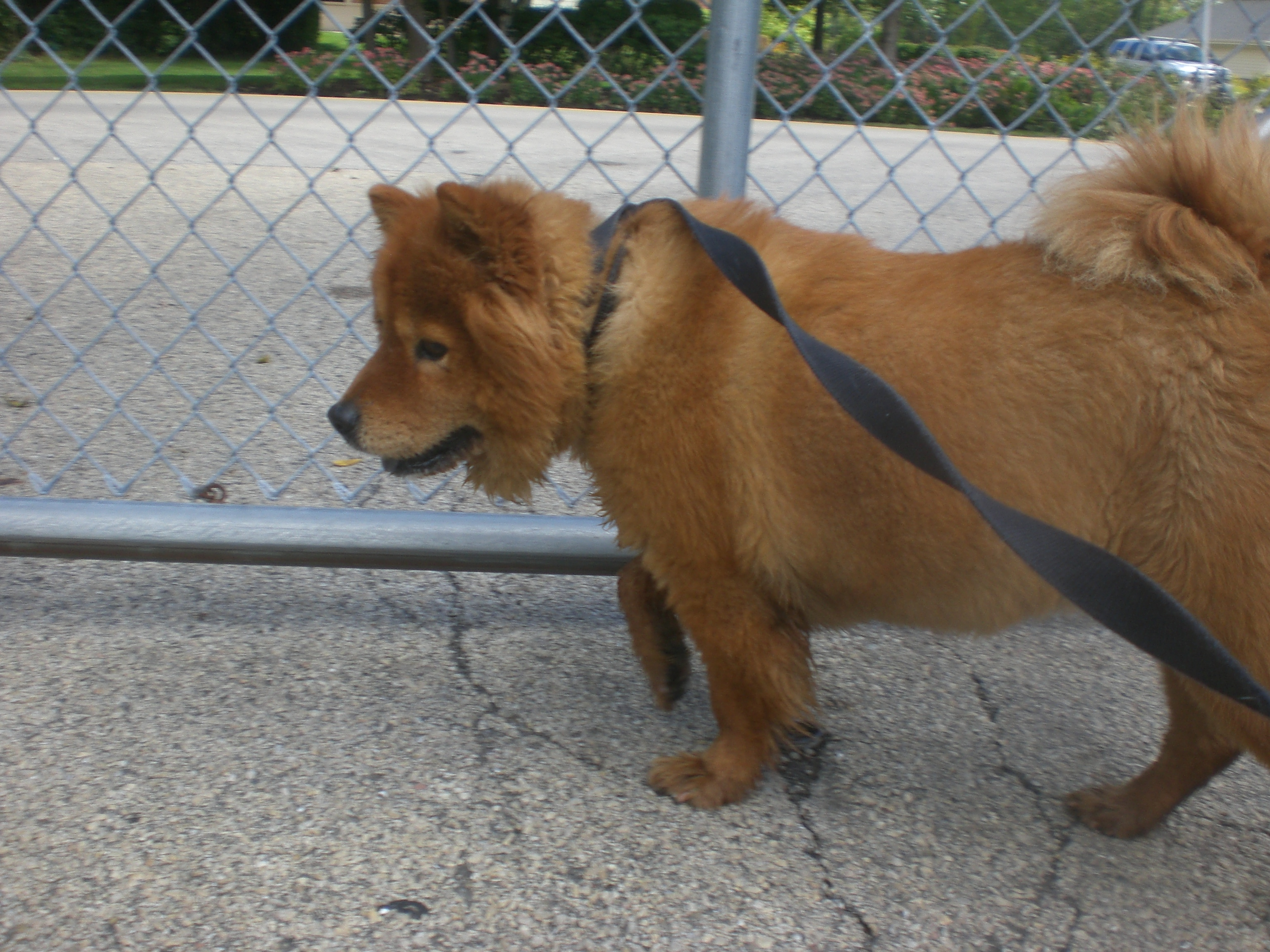 Jelly Chow Chow mix 1
