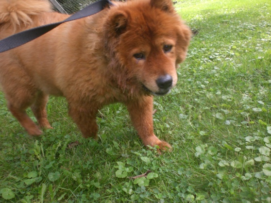 Jelly Chow Chow mix 2