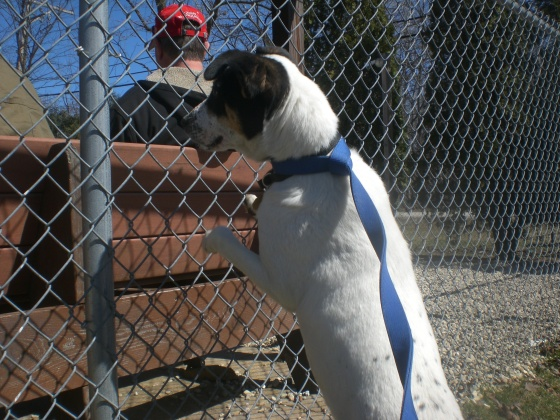 Heaven Jack Russell Terrier mix 2