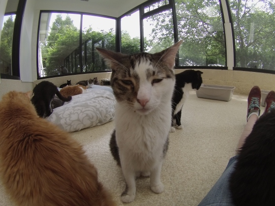 Orphans of the Storm Cats 2