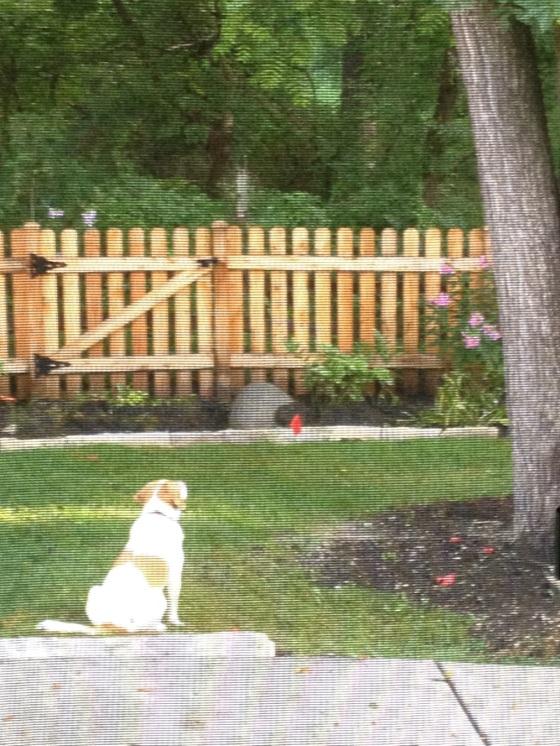 Josie loves watching squirrels