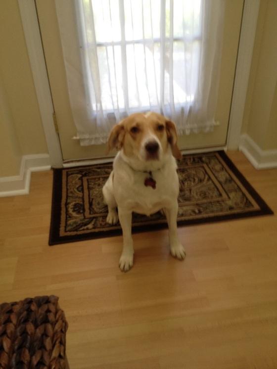 Josie ready for a walk