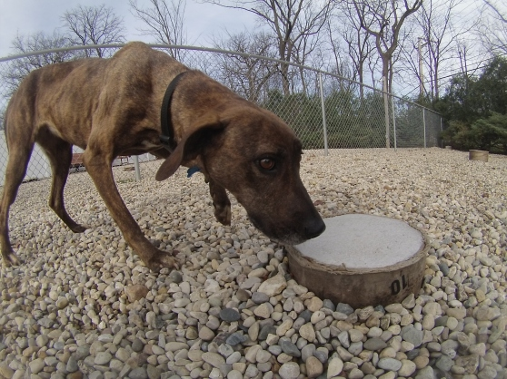 Maggie Mountain Cur mix 2