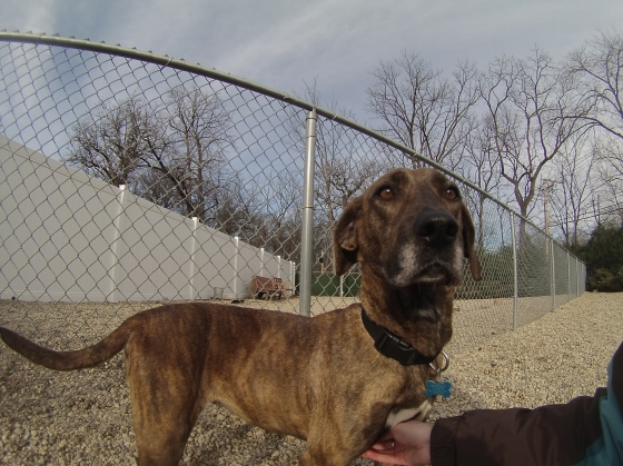 Maggie Mountain Cur mix 1