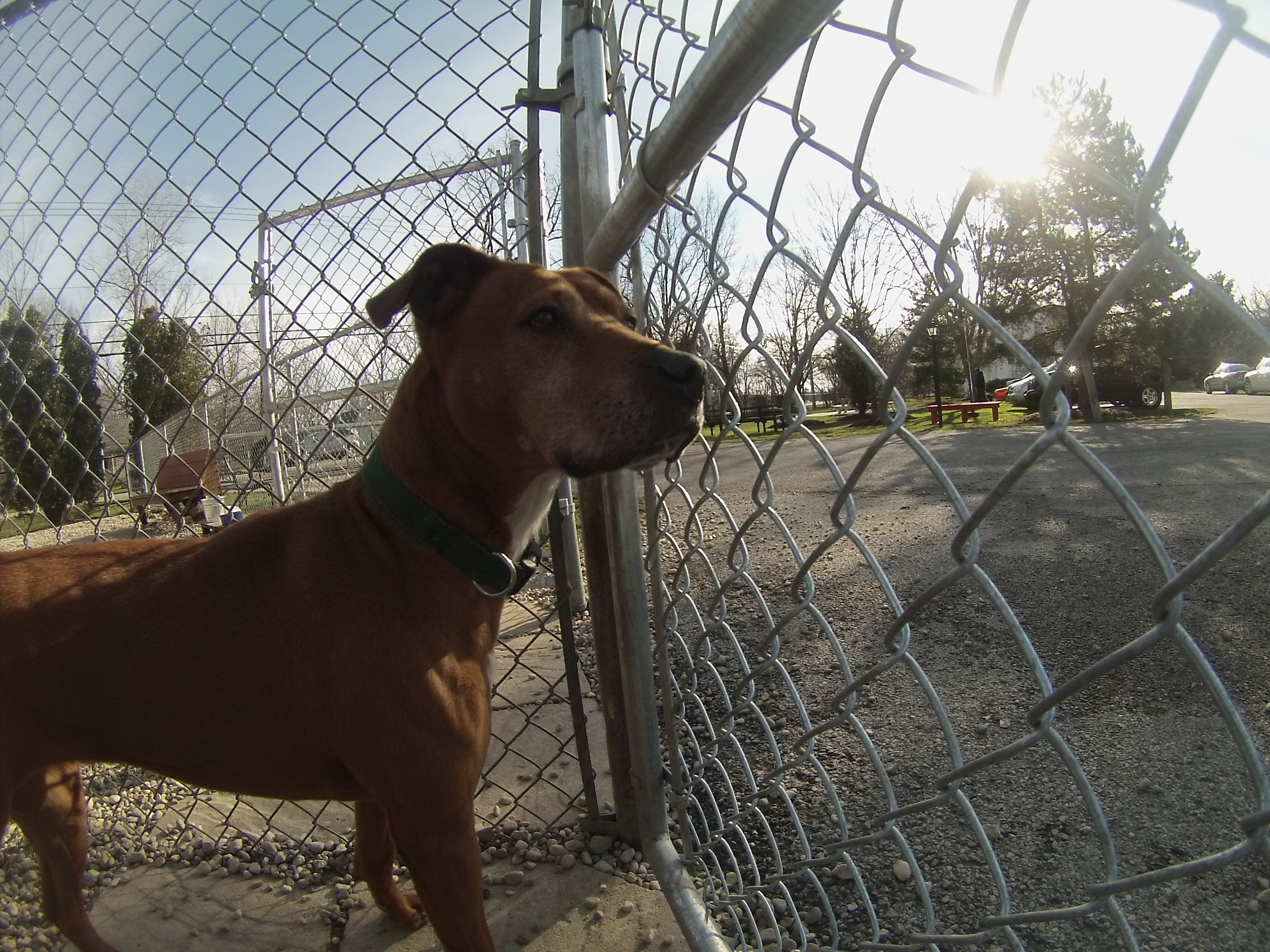 Orphans of the Storm Dogs: Roxy Update