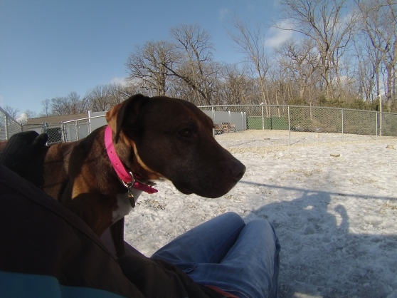 Orphans of the Storm Dogs: Ginger Lab 1