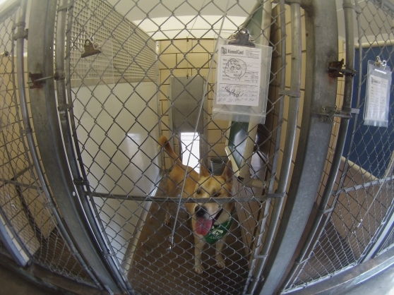 Orphans of the Storm Clear the Shelters 2016 5