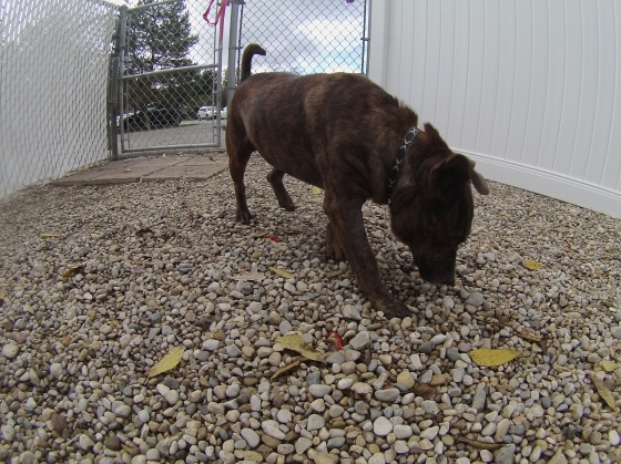 Orphans of the Storm Dogs: Maggie SBT 1