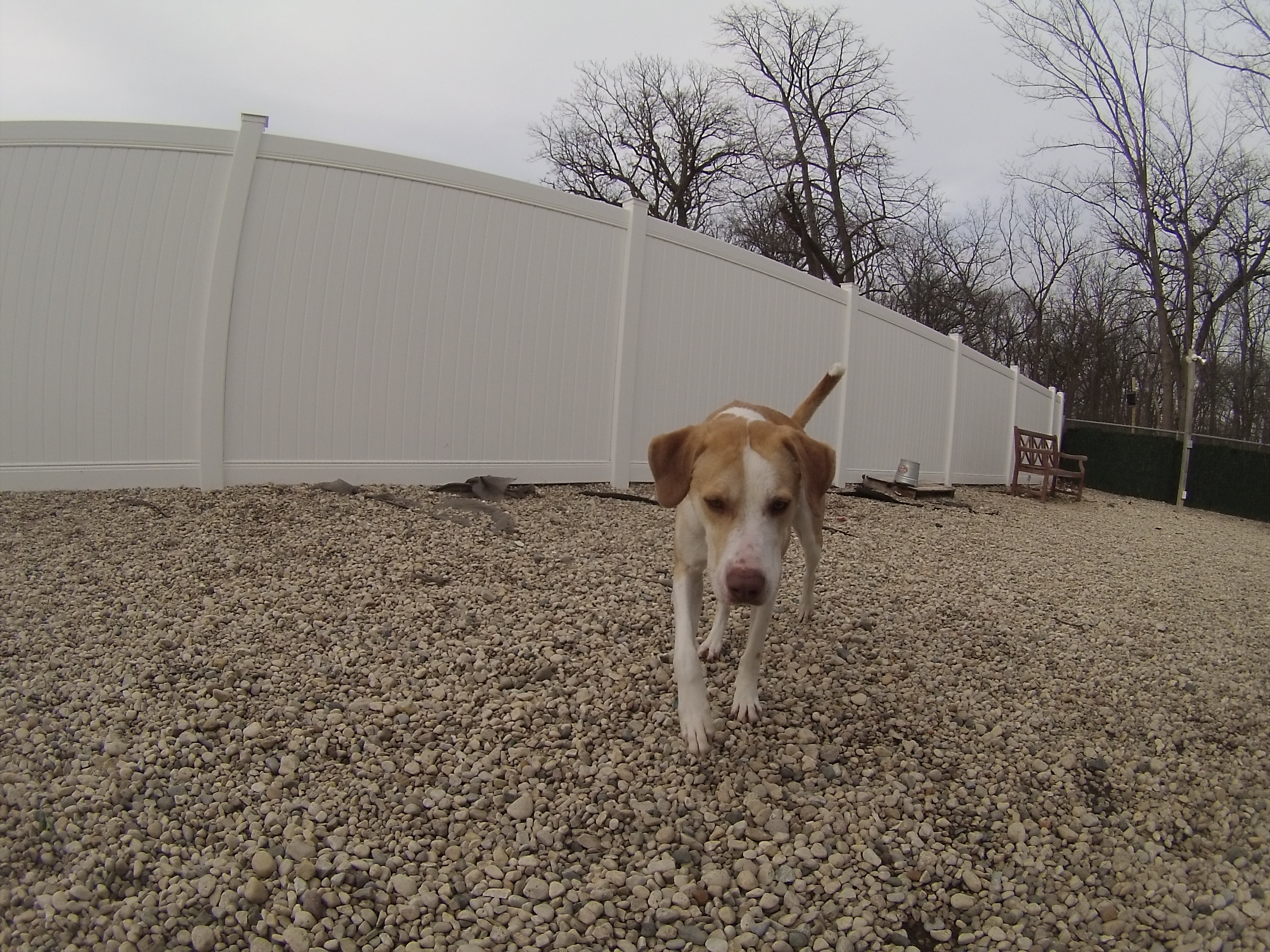 Orphans of the Storm Dogs: Noah update