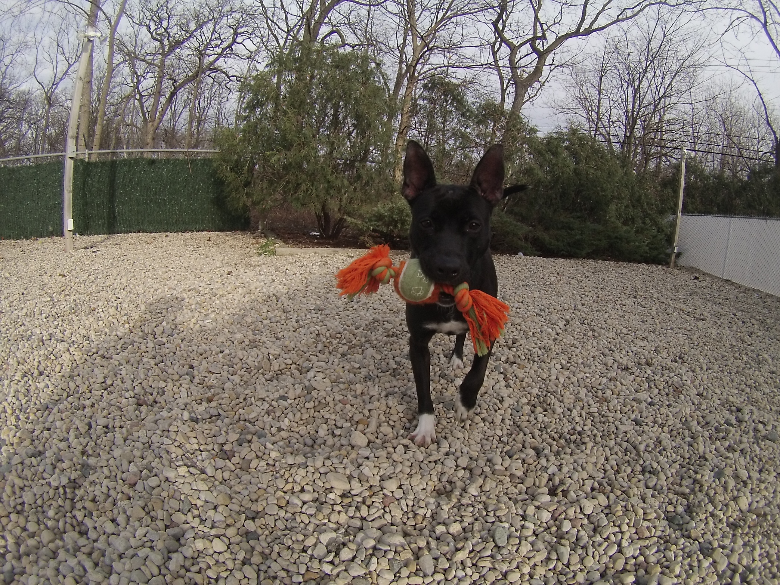 Orphans of the Storm Dogs: Sammy update