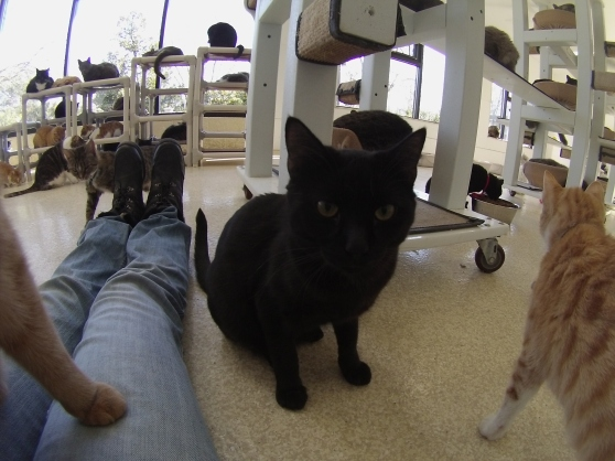 Orphans of the Storm Cat Room 2017 1