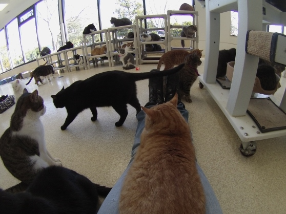 Orphans of the Storm Cat Room 2017 8