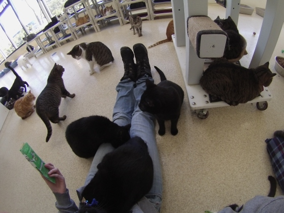 Orphans of the Storm Cat Room January 2017 10