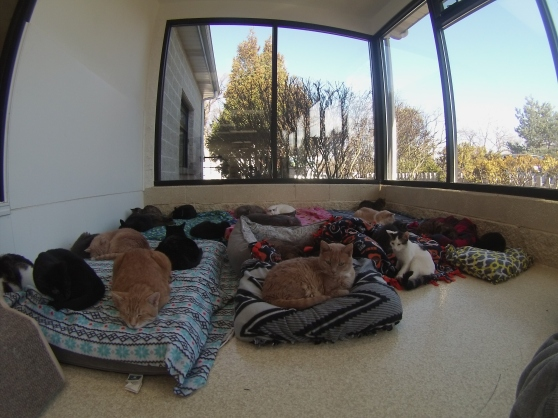 Orphans of the Storm Cat Room 2017 13