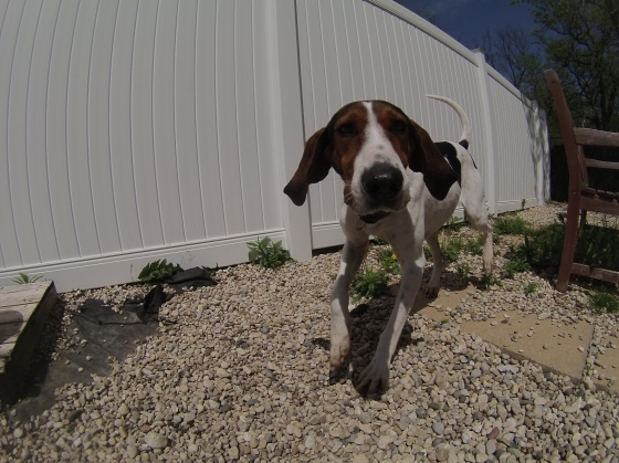 Orphans of the Storm Dogs: Oliver Coonhound 1
