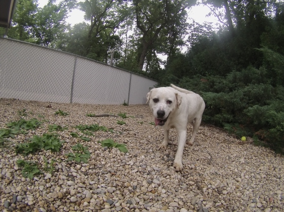 Orphans of the Storm Dogs: Otis Lab 2