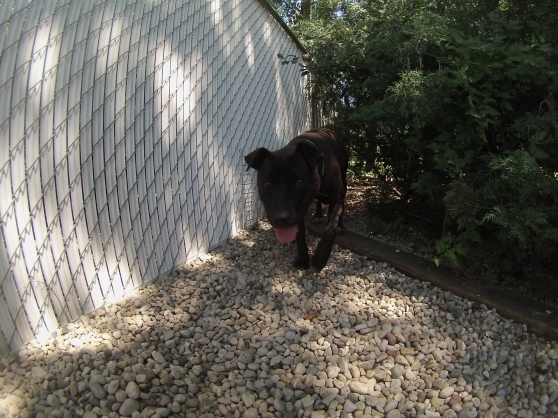 Orphans of the Storm Dogs: Brownie 1
