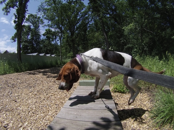 Orphans of the Storm Dogs: Daisy Hound 1