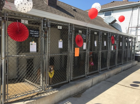 Clear the Shelters 2017 4