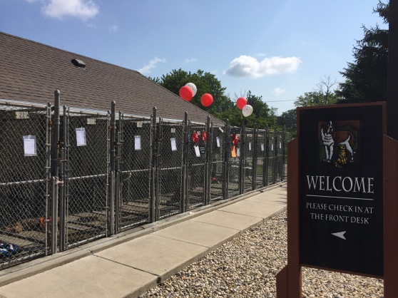 Clear the Shelters 2017 2