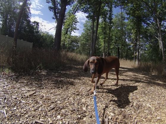 Orphans of the Storm Dogs: Calhoun 1