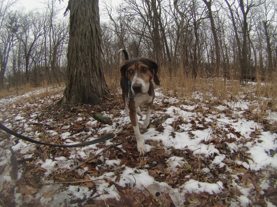 Orphans of the Storm Dogs: Howard Hound 1