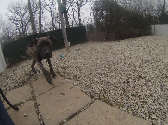 Orphans of the Storm Dogs: Tucker Lab Mountain Cur 1